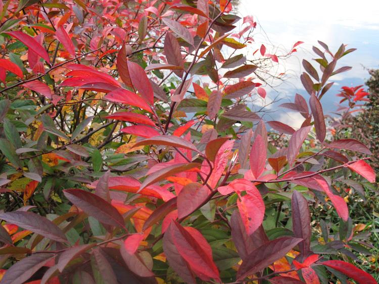 amrita-fall-photography-central park