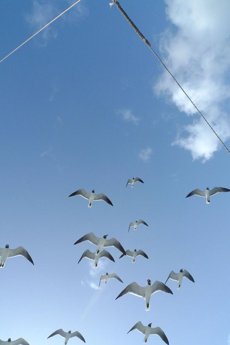 stmartin-2-seagull